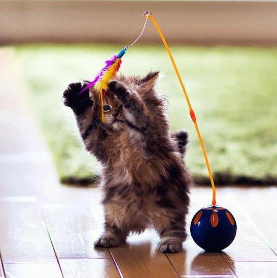 O pisica jucausa